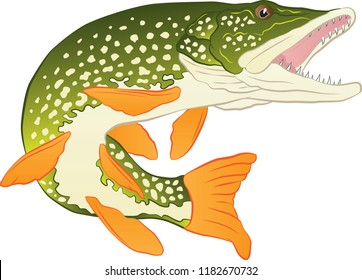 Northern Pike Vector Colored