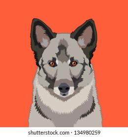 Norwegian elkhound, The buddy dog