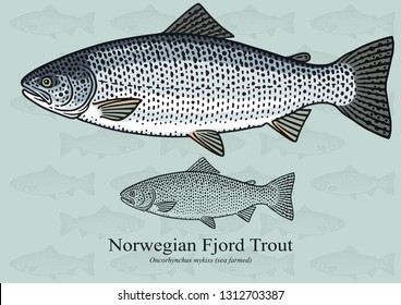 Norwegian Fjord Trout, Rainbow Trout. Vector illustration with refined details and optimized stroke that allows the image to be used in small sizes.