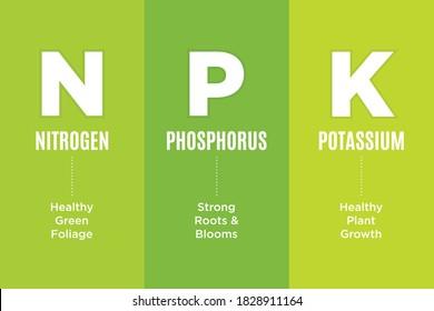 NPK, Garden Fertilizer Chart, Nitrogen, Phosphorous, Potassium, Information Vector Illustration Background