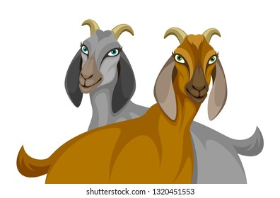 Nubian goats on a white background