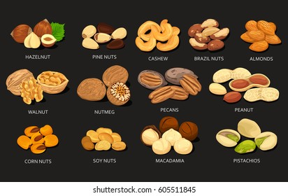 Nut food grains or beans of cashew and brazil, pine, soy and corn nuts, hazelnut and cashew, almonds and walnut, nutmeg and pecan, peanut and macadamia, pistachio. Nutrition and agriculture