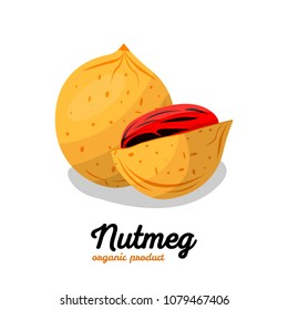 Nutmeg in cartoon style. Nut Illustration for template label, packing and emblem farmer market design. Nut food of  nutmeg icon.