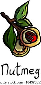 Nutmeg, on branch, floristry, flower shop, botany, seasoning, ingredient, garden, kitchen, flowering, fruit, leaves, isolated, tree fruit, berry, lettering, ossicle, postcard, essential oil, aroma