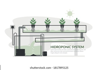 Nutrient film technique (NTF) Hydroponic system