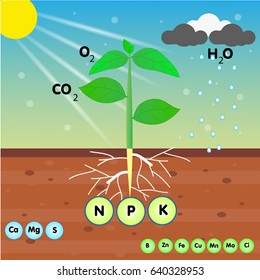 the nutrient of a plant