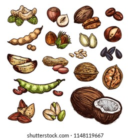 Nuts and beans sketch organic farm coconut, peanuts, pistachios and walnuts. Vector isolated nuts harvest of sunflower seeds, cashews or almonds and filbert nut