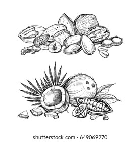 Nuts mix vector isolated on white background. Engraved vector illustration of hazelnut, cocoa, coconut, peanut and other nuts.