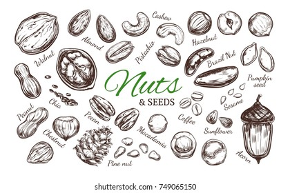 Nuts and seeds collection. Vector  Hand drawn  objects . Isolated on white. Modern brushpen Calligraphy.