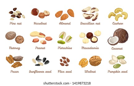 Nuts and seeds set. Cashew, hazelnut, almond, brazil nut, walnut, peanut, pistachios, macadamia, pecan, nutmeg, cedar, coconut. Pumpkin, sunflower, flax seeds.Vector illustration in cartoon flat style