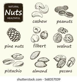 Nuts set. Hand drawn vintage illustration.