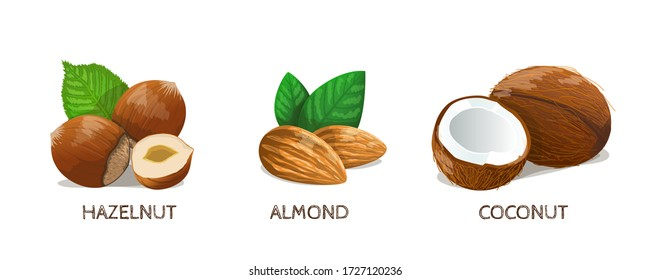 Nuts set: Hazelnut, Almond, Coconut. Vector Illustration.