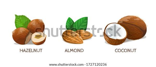 Nuts set: Hazelnut, Almond, Coconut. Vector Illustration.