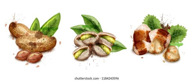 Nuts set watercolor Vector. Pistachio, hazelnut and peanuts illustrations