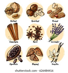 Nuts and spices line drawn on a white background. Sketch of food. Walnut, hazelnut, peanuts, cinnamon, anise, lavender, chocolate, almonds, vanilla
