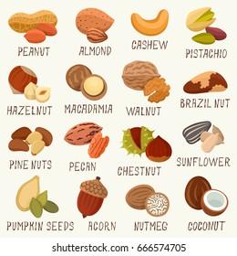 Nuts vector set