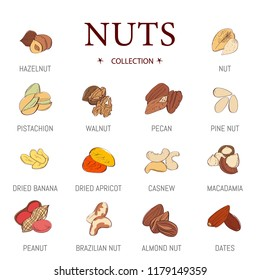 Nuts vector set. Nuts vector nutshell of hazelnut almond and walnut nutrition illustration set cashew peanut and chestnut with nutmeg isolated on white background