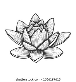 Nymphaea water lotus lily flower vintage sketch engraving vector illustration. Scratch board style imitation. Black and white hand drawn image.