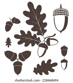 Oak. Acorn. Vector illustration