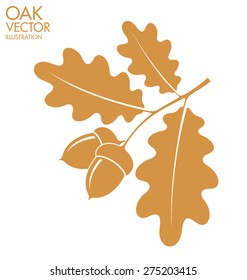 Oak. Branch with acorns. Vector illustration