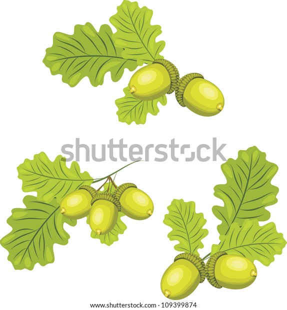 oak-branches-acorns-vector-600w-10939987