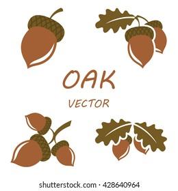 Oak in flat style. Isolated object. Vector illustration. Oak on white background