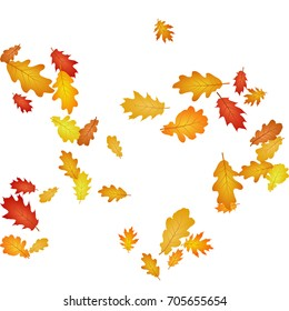 Oak leaf abstract background seasonal vector illustration. Autumn leaves falling graphic design. Fall season specific vector background. Oak tree autumn foliage on white.