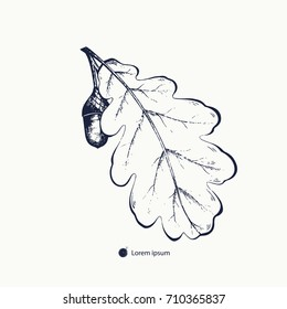 Oak leaf with acorn hand drawn. The image of oak leaf with acorn can be used for tattoo, engraving, printing t shirts, fashion design. Vector illustration.