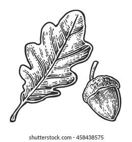 Oak leaf and acorn. Vector vintage engraved illustration. Isolated on white background