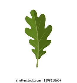 Oak leaf. Autumn vector object isolated on white