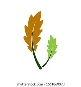 Oak leaf icon logo vector illustration