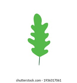 Oak leaf on white background. Green herbal element.