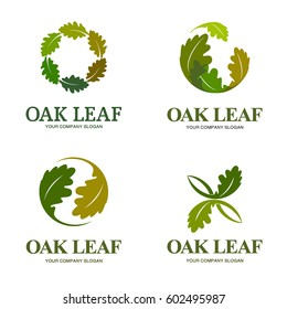 Oak leaf vector logo set. Logo templates.