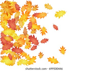 Oak leaves flying confetti vector background. Seasonal background for september, october, november design. Left side border with autumn foliage on white. Autumn leaves falling down vector illustration