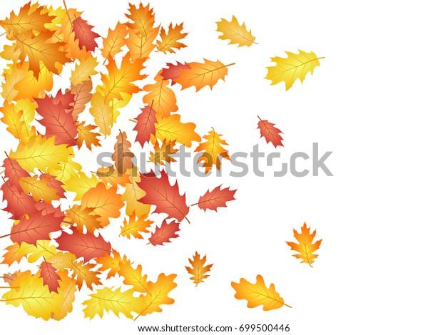 空の紙吹雪のベクター画像の背景にオークの葉 9月 10月 11月の季節の背景デザイン 白い背景に左端と秋の葉 秋の葉が落ちるベクターイラスト のベクター画像素材 ロイヤリティフリー