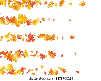Oak, maple, wild ash rowan leaves vector, autumn foliage on white background. Red gold yellow ash and oak autumn leaves. Detailed tree foliage november seasonal background.