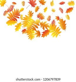 Oak, maple, wild ash rowan leaves vector, autumn foliage on white background. Red orange yellow rowan dry autumn leaves. Abstract tree foliage vector september season specific background.