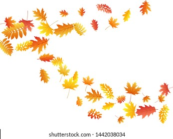 Oak, maple, wild ash rowan leaves vector, autumn foliage on white background. Red gold yellow oak dry autumn leaves. Realistic tree foliage fall seasonal background pattern.