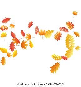 Oak, maple, wild ash rowan leaves vector, autumn foliage on white background. Red gold yellow sorb dry autumn leaves. Stylish tree foliage vector september seasonal background.