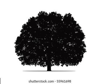 oak silhouette vector