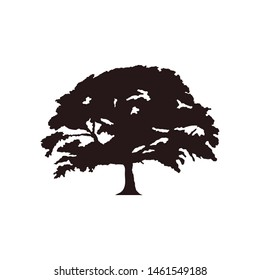 Oak tree icon vector. Vector silhouette of a tree.