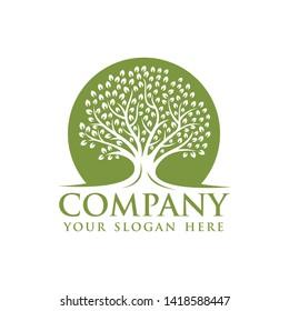 Oak tree logo template vector