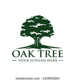 Oak tree logo template vector
