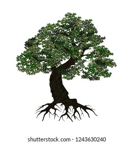 oak tree logo vector illustration, tree that is very sturdy and strong and realistics