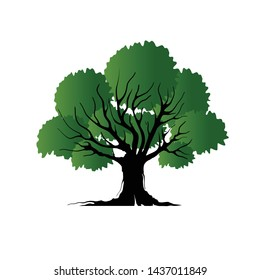 oak tree with roots vector isolated