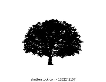 Oak tree vector, green ecology biological logo illustration. Vector black silhouette of a tree isolated or white background , biodynamic agriculture concept