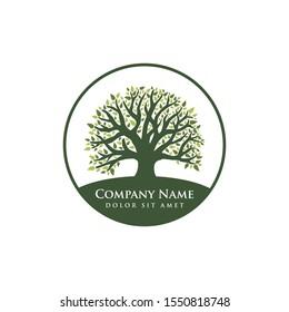 oak tree vector illustration logo design template. Abstract vibrant tree logo design