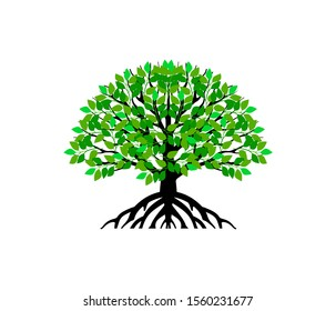 oak tree vector illustration. roots of banyan tree. mangrove plant