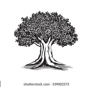 Oak Tree Vector Logo Illustration Design