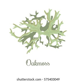 Oakmoss or Evernia prunastri. lichen. fragrant compounds, perfume absolutes and fixative, realistic. For cosmetics, health care products, advertising, tag, label,